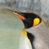 Some Linking Strategies That Will Give You A Good Reputation With The Penguin